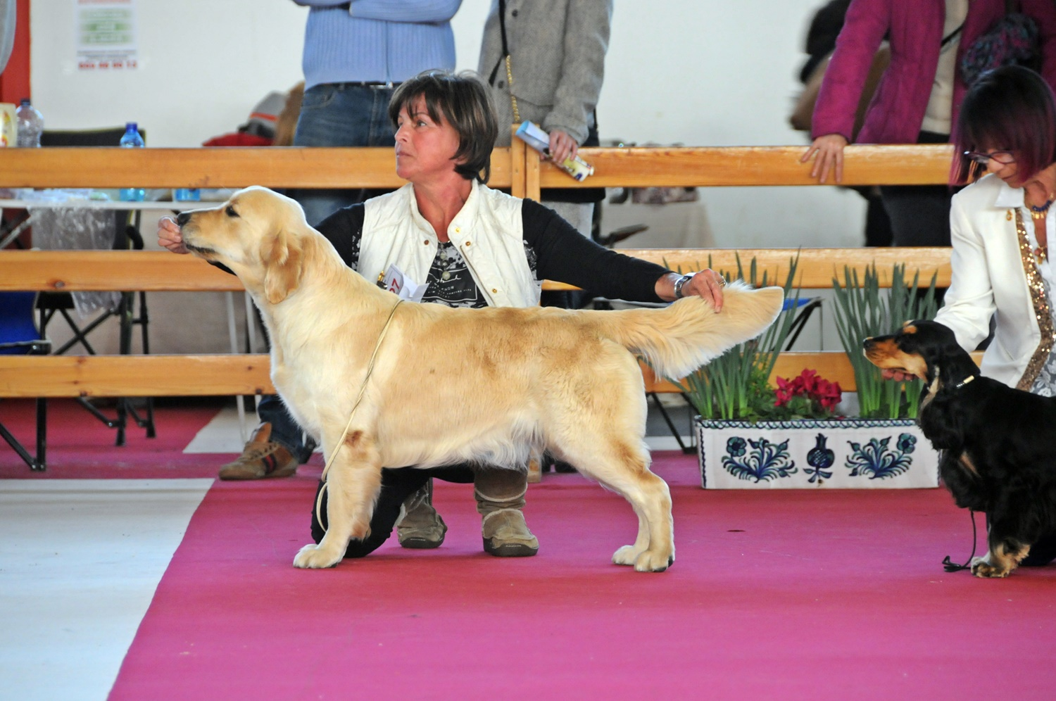 """Tati"" RES Best of Breed Granada 2016"