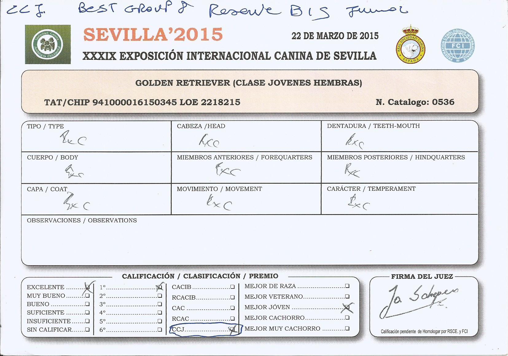 WEB TIARE CC JR RES  BIS SEVILLA INTL 2015