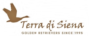 Terra Di Siena golden retrievers.